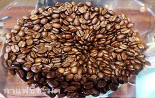 กาแฟขี้ชะมดเมล็ดกาแฟที่กำลังได้รับความนิยม